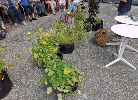 atelier découverte de plantes potagères