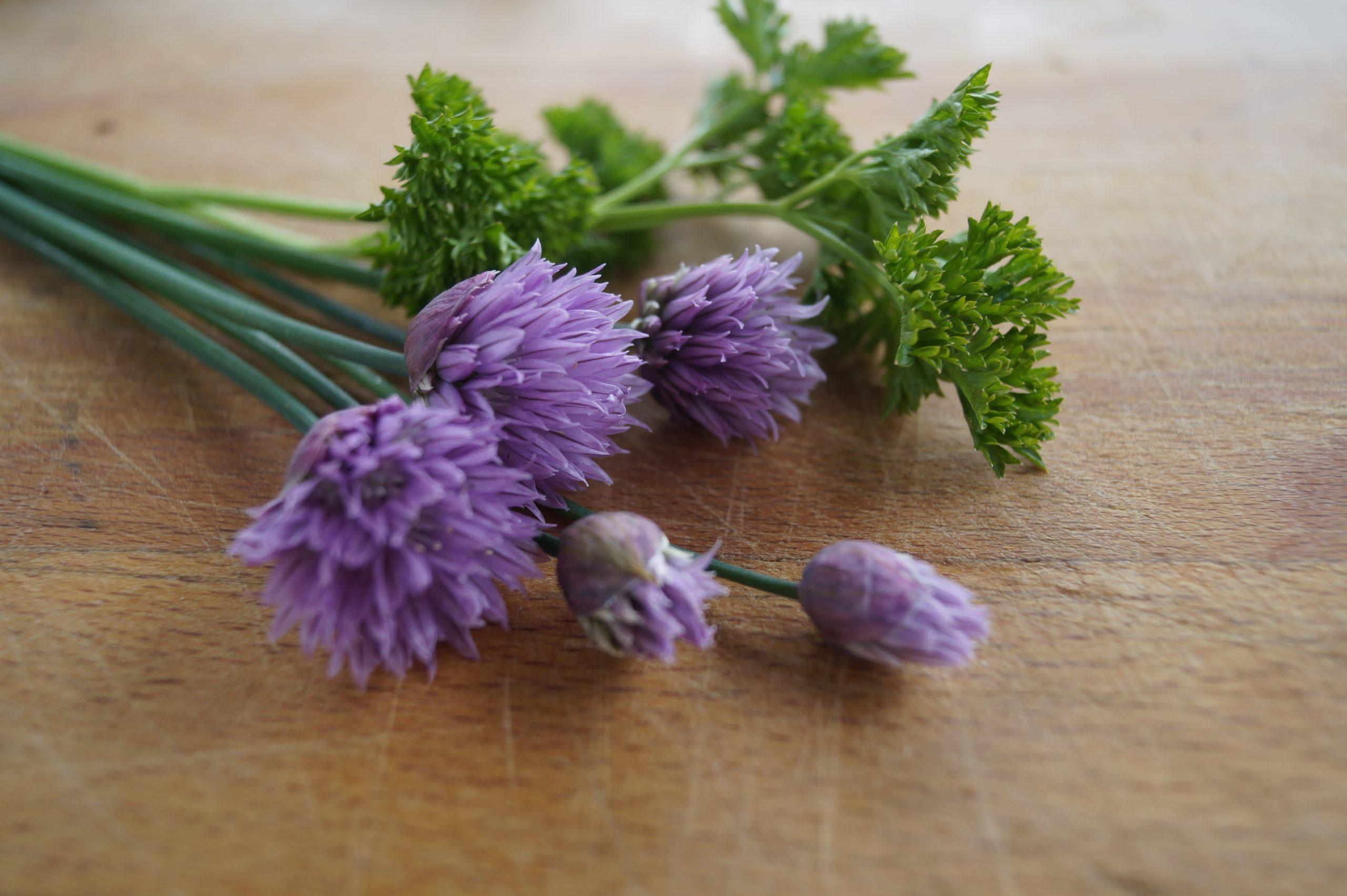 fleurs ciboulette et persil