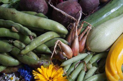 légumes d'été betteraves courgette
