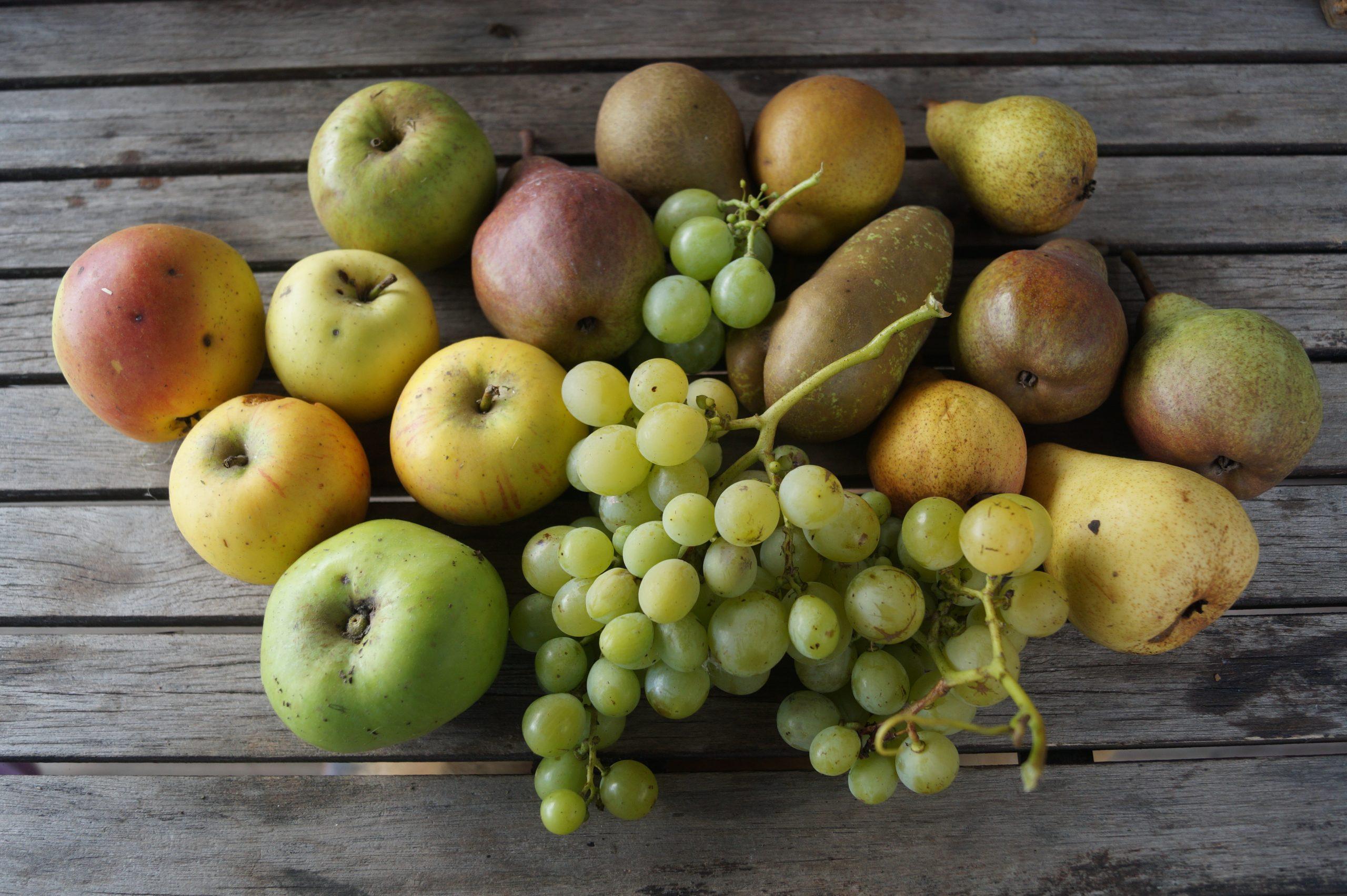 fruits de début automne raisin pomme poire