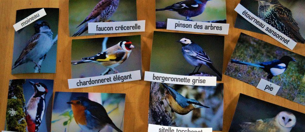 atelier reconnaissance oiseaux du jardin