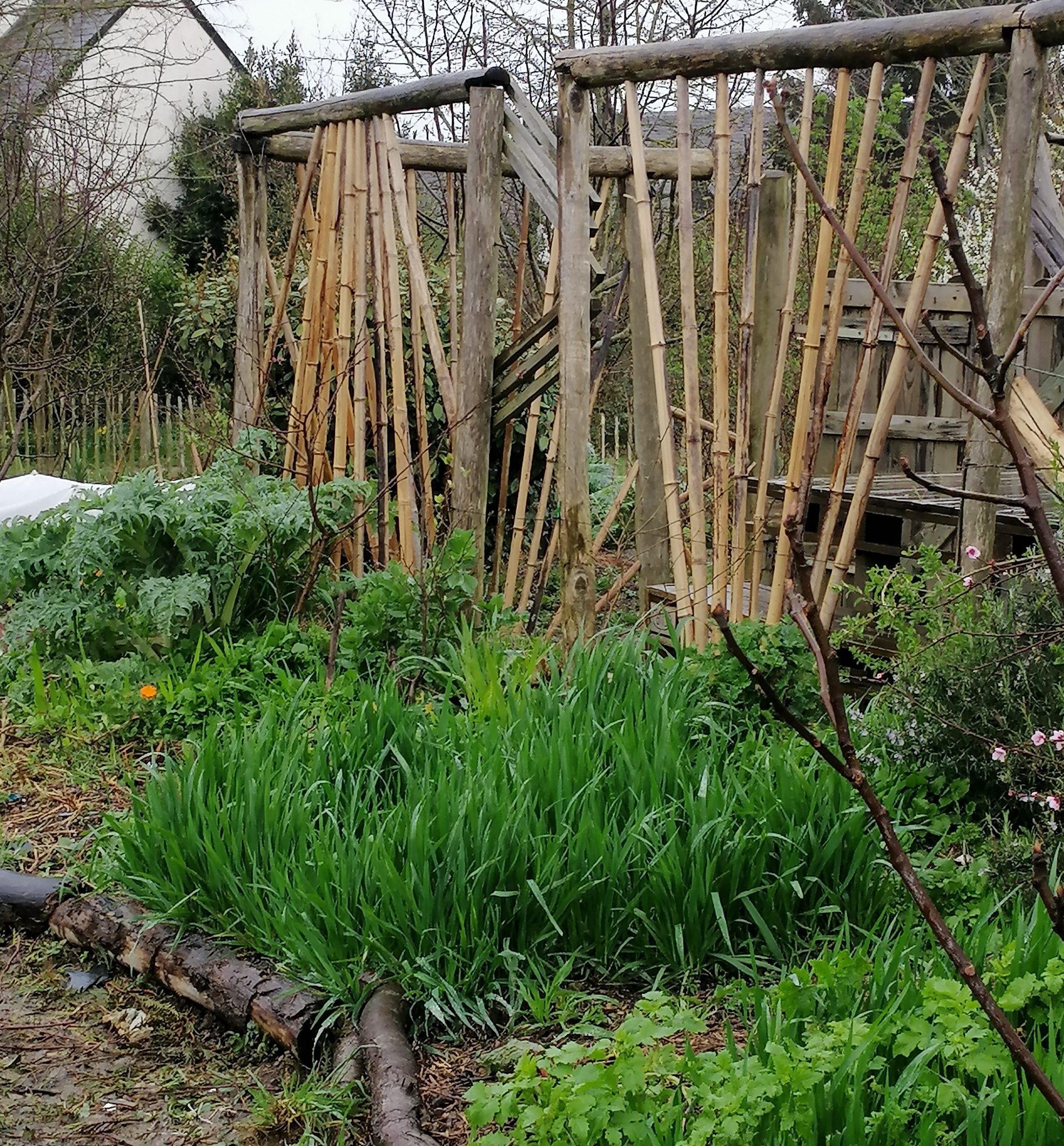 installation de tuteur en bambou au jardin