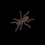 dessin fourmi