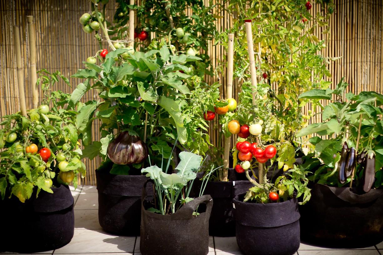 sacs de culture avec legumes d'ete