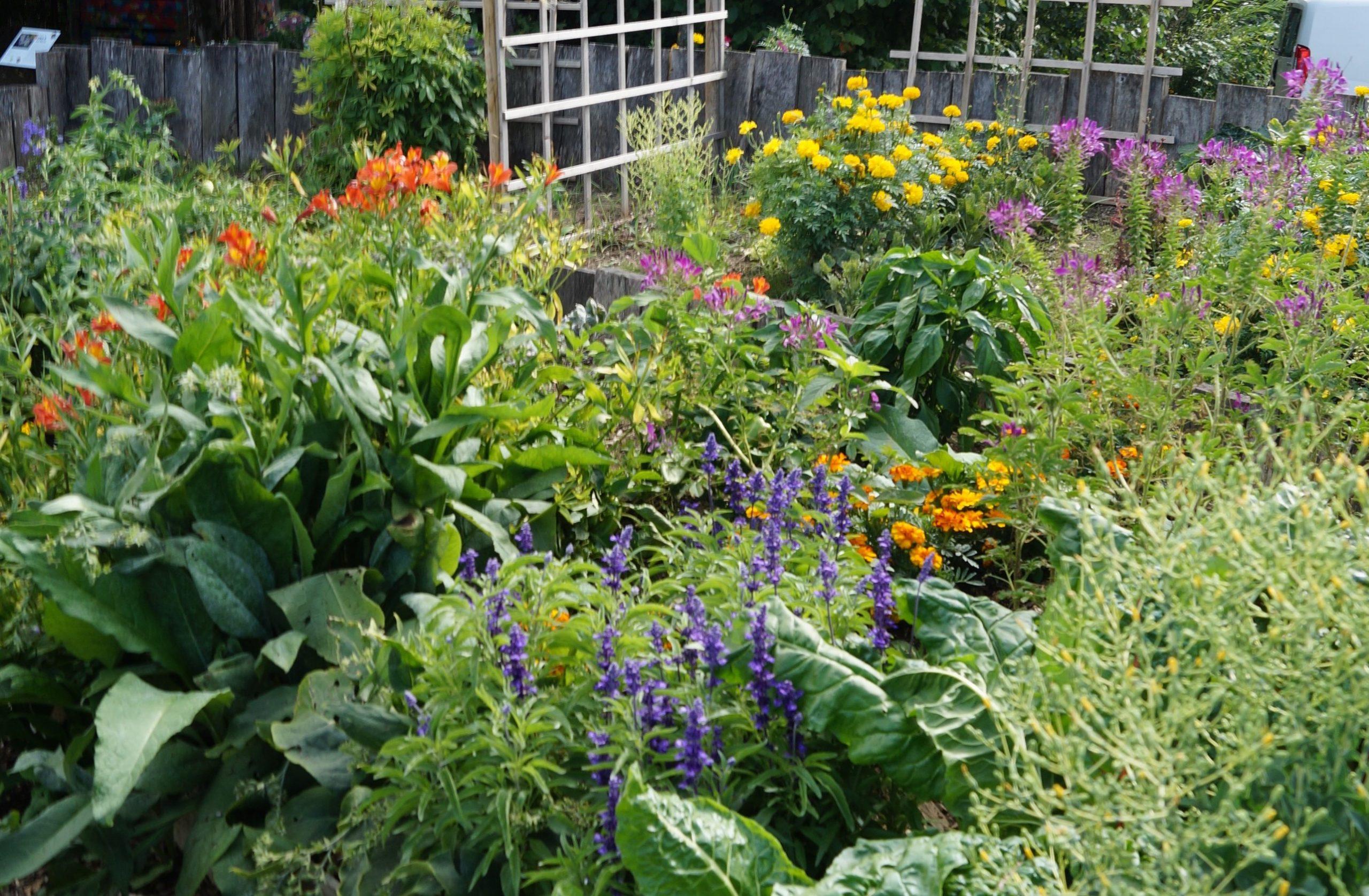 massif fleurs variées et claustra