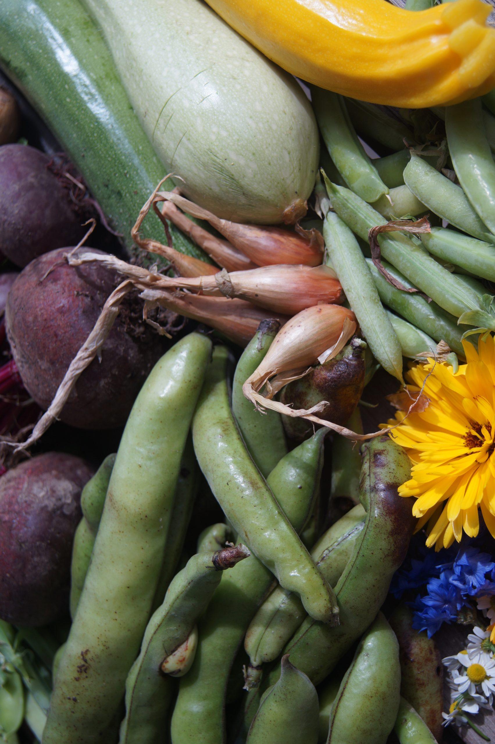 légumes début été fève courgette