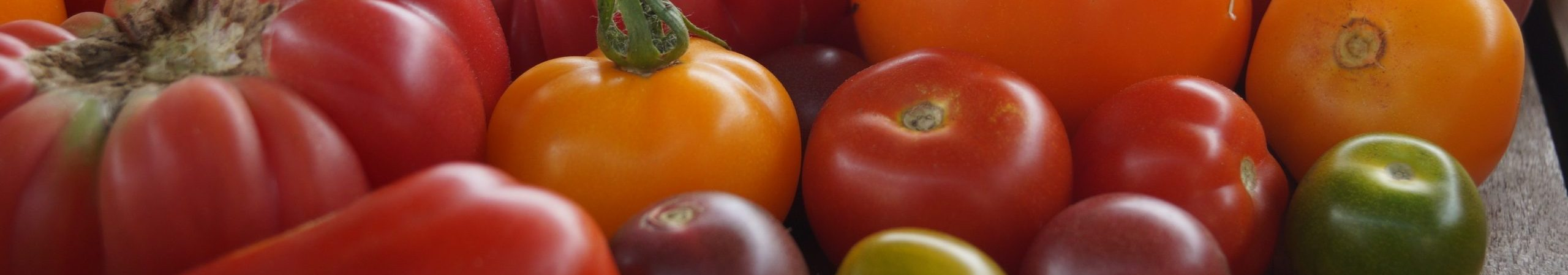 tomates anciennes couleur variée