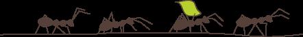 dessin fourmis et feuille